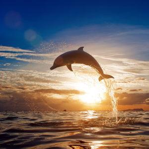 Фотообои Дельфин в полете (animals-517)
