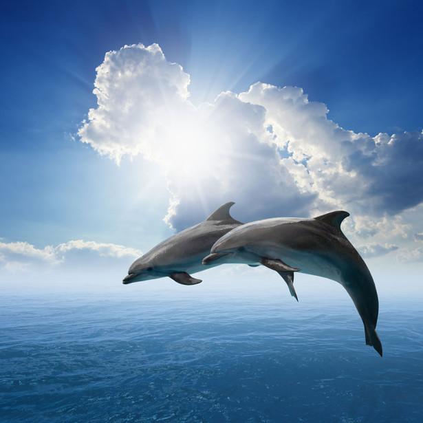 Фотообои Два дельфина (animals-521)
