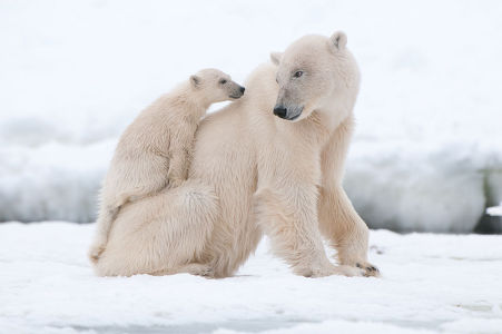 Фотообои Медведица мамочка (animals-525)