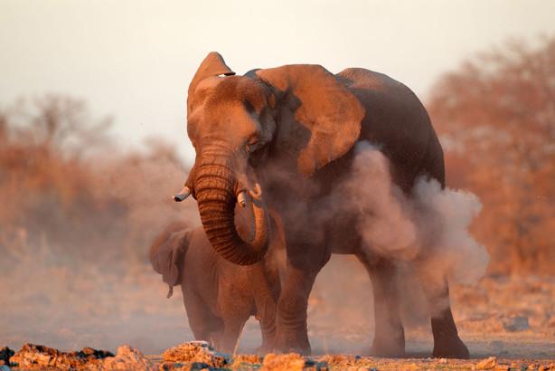 Фотообои Купание слона (animals-544)