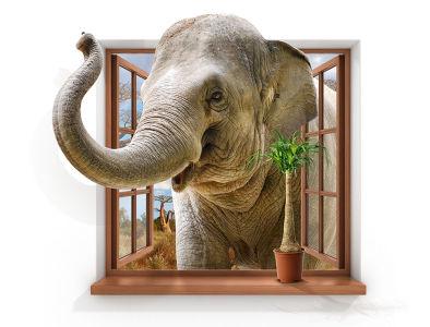 Фотообои Слон в окне (child-474)