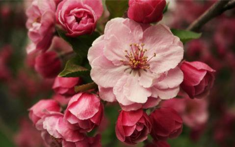 Фотообои на стену цветы Цветущая ветка (flowers-0000014)