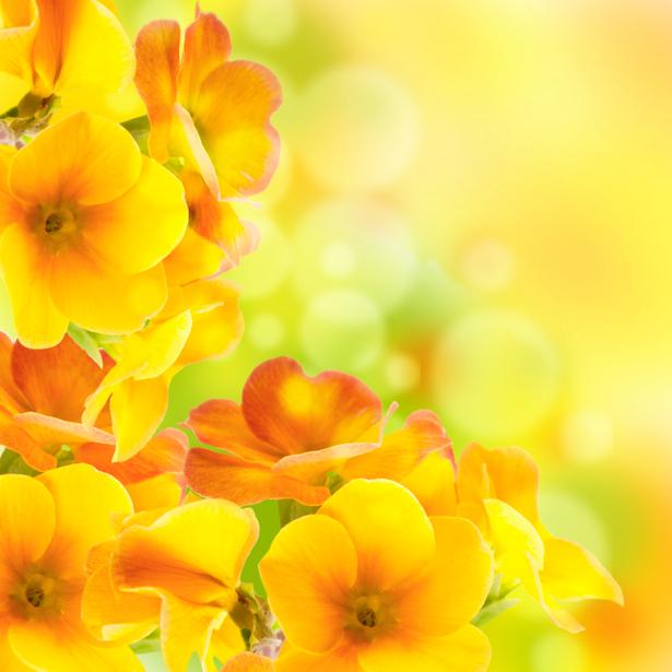 Желтые цветы фотообои цветов на стену (flowers-0000227)