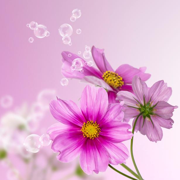 Розовые цветы фото обои (flowers-0000307)