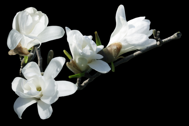 Обои фото цветок ветка белой орхидеи (flowers-0000566)