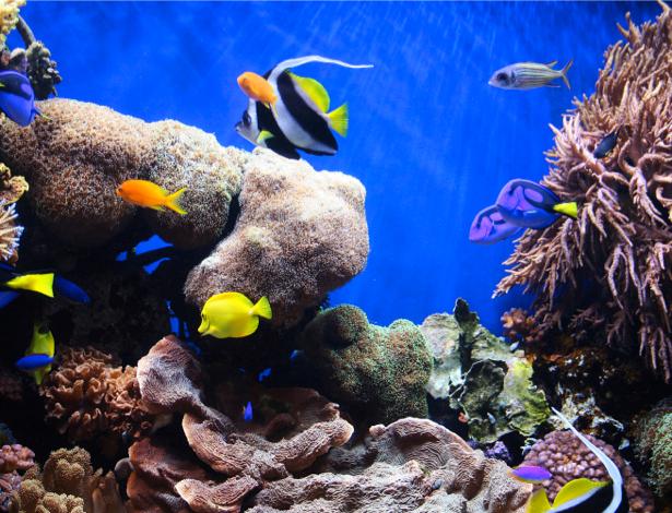 Фотообои ванная море рыба клоун (underwater-world-00020)