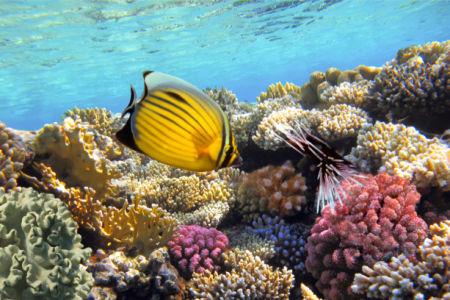 Фотообои для ванны подводный мир (underwater-world-00211)