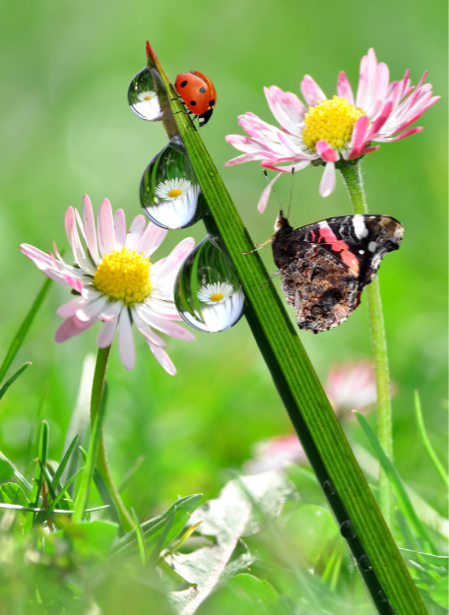 Фотообои трава божьи коровки капли роса (animals-0000255)