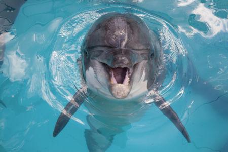 Фотообои дельфин улыбка (animals-0000272)