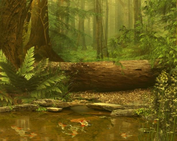 Фотообои Лес, река, папоротник (art-0000698)