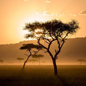 Фотошторы закат в Масаи-Мара Кении (bedroom-curtain-00004)