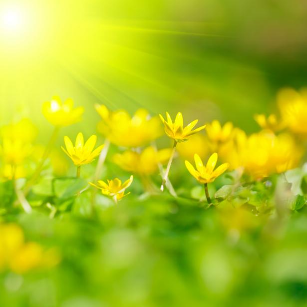 Фотообои цветов на стену Желтые цветы (flowers-0000222)