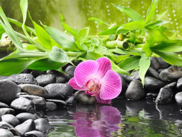 Фотообои на стену архидея (flowers-0000401)