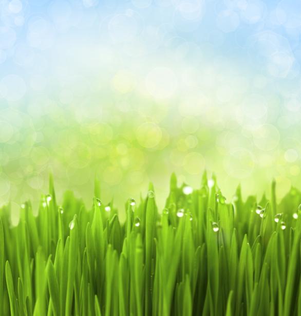 Фото обои на стену зеленая трава (flowers-0000511)