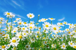 flowers-790
