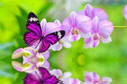 flowers-796