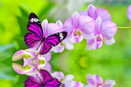 Фотообои Бабочка на орхидеи (flowers-796)