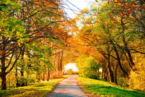 Фотообои дорога в осенний лес (nature-0000816)