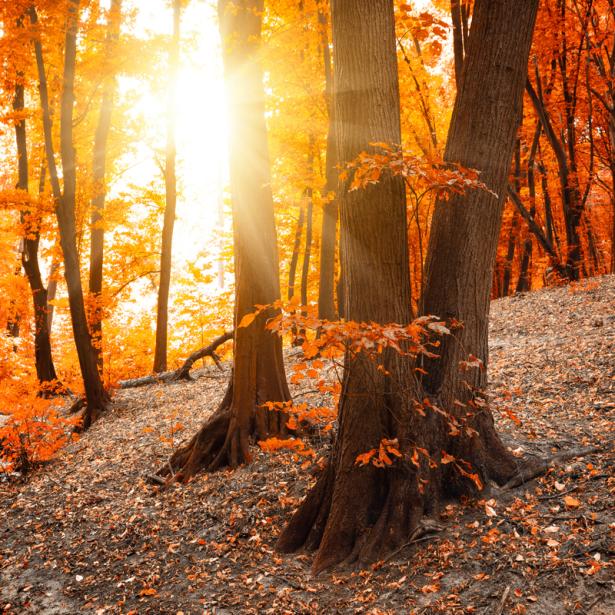 Фотообои осенний лес солнце (nature-0000819)