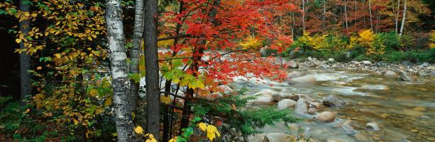 Фотообои осенний пейзаж с горной речкой (nature-00341)