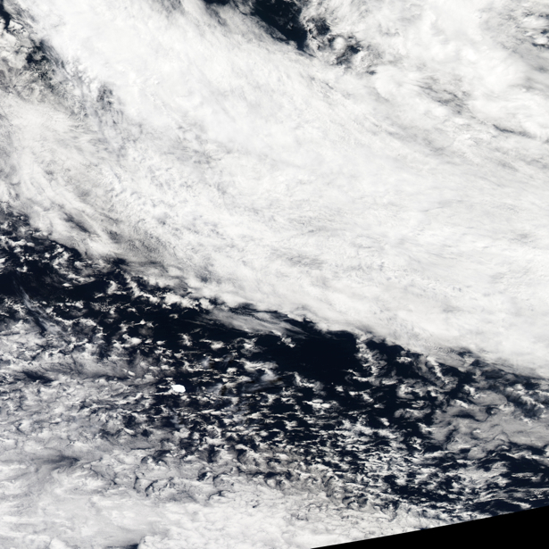 Фотообои фото белое на черном (terra-00126)