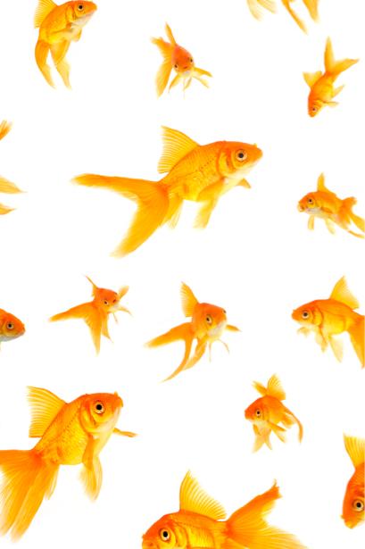 Фотообои для ванны золотые рыбки (underwater-world-00012)