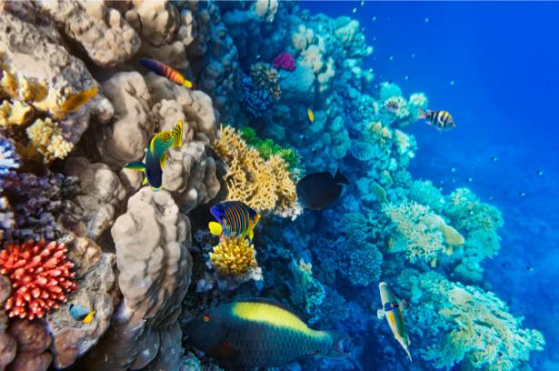 Фотообои ванная кораллы море рыбки (underwater-world-00024)