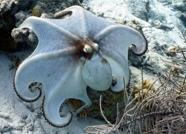 Фотообои для ванны кальмар (underwater-world-00140)