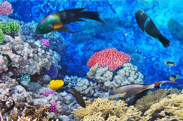 Фотообои для ванны рыбки в море (underwater-world-00161)