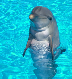 Фотообои дельфин позер (animals-0000341)