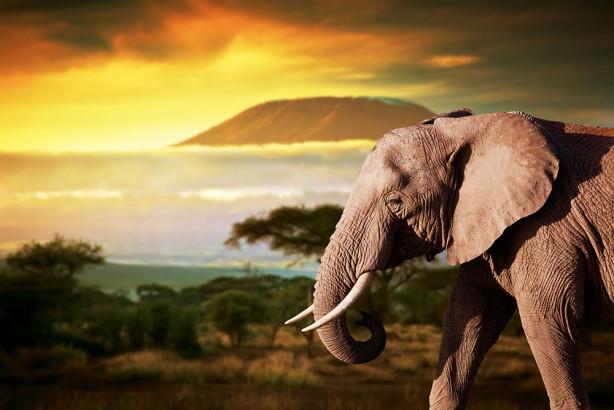 Фотообои Слон путешественник (animals-559)