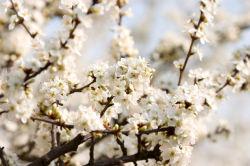flowers-0000019