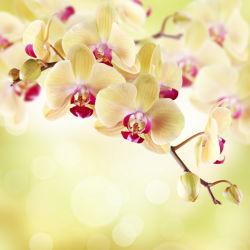 flowers-0000023