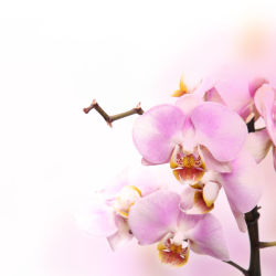 flowers-0000033