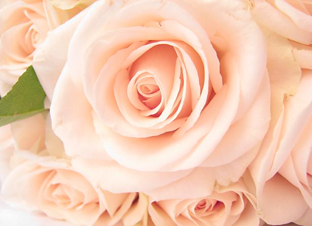 Белые розы фотообои цветов (flowers-0000288)