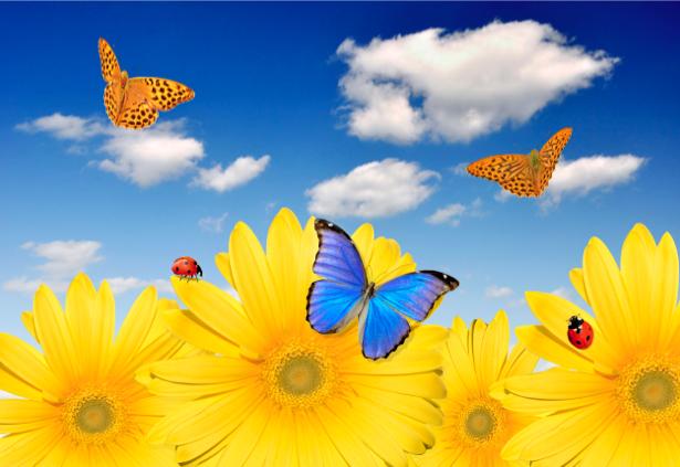 Фото обои на стену Подсолнух и бабочки (flowers-0000291)