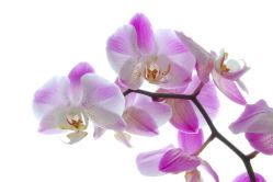 flowers-0000297