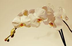 flowers-0000449