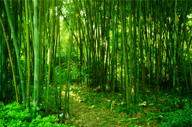 Фото обои на стену бамбуковая роща (flowers-0000512)