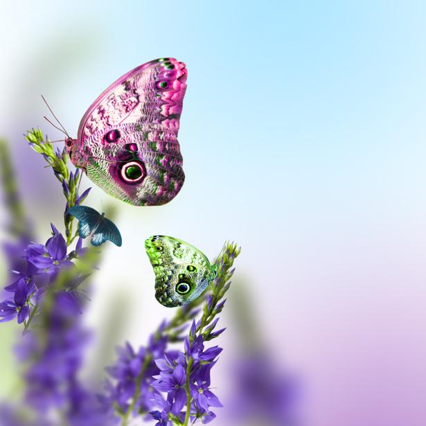 Обои фото цветущая ветка (flowers-0000572)