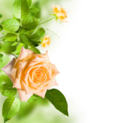 flowers-0000573