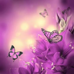 flowers-0000578
