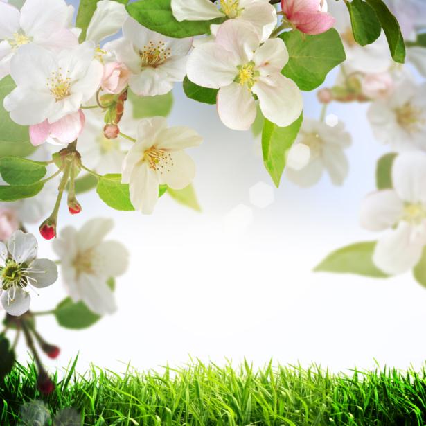 Цветочные обои цветущая ветка (flowers-0000631)