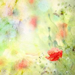flowers-0000686