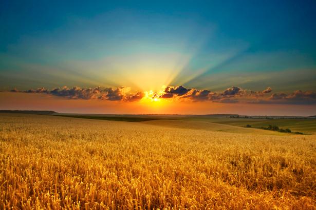 Фотообои с природой поле пшеницы закат (nature-00001)