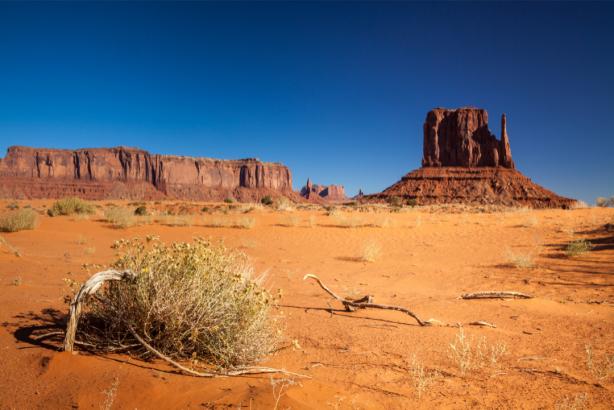 Фотообои Гранд-Каньон перекати поле (nature-0000766)