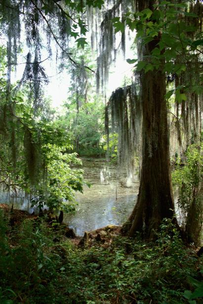 Фотообои лес озеро фото (nature-00216)