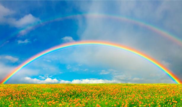 Фотообои радуга небо поле (nature-00264)