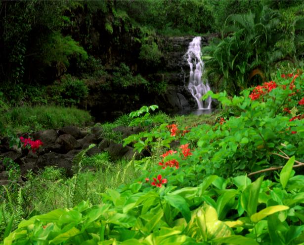 Фотообои водопадик с цветами (nature-00373)