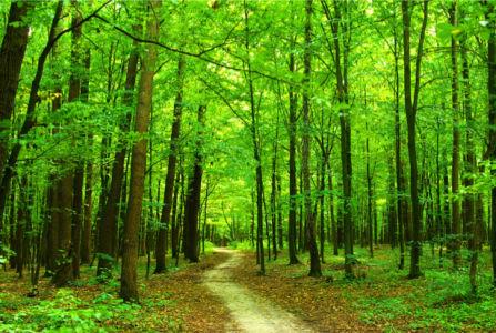 Фотообои дорога в лес (nature-00536)